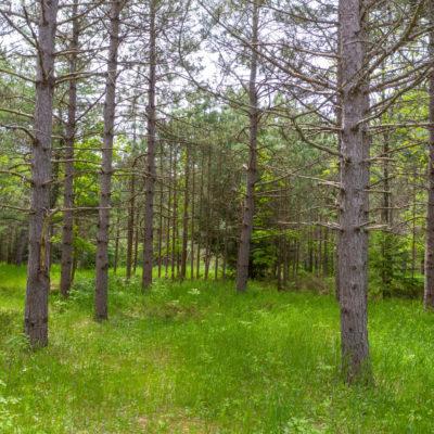 Alvor Pines Hideaway